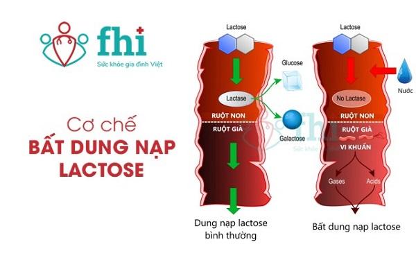 cơ chế bất dung nạp lactose
